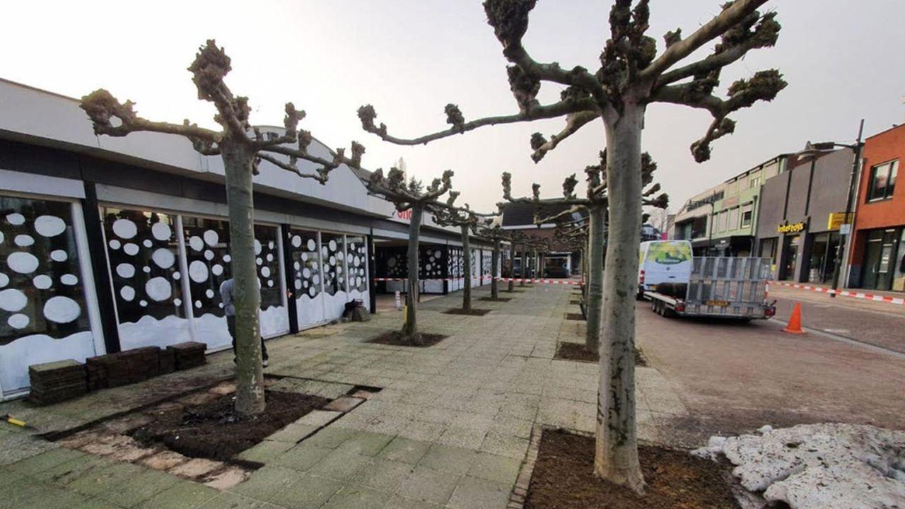 Bomen uit centrum Horst krijgen nieuwe plek in Venray