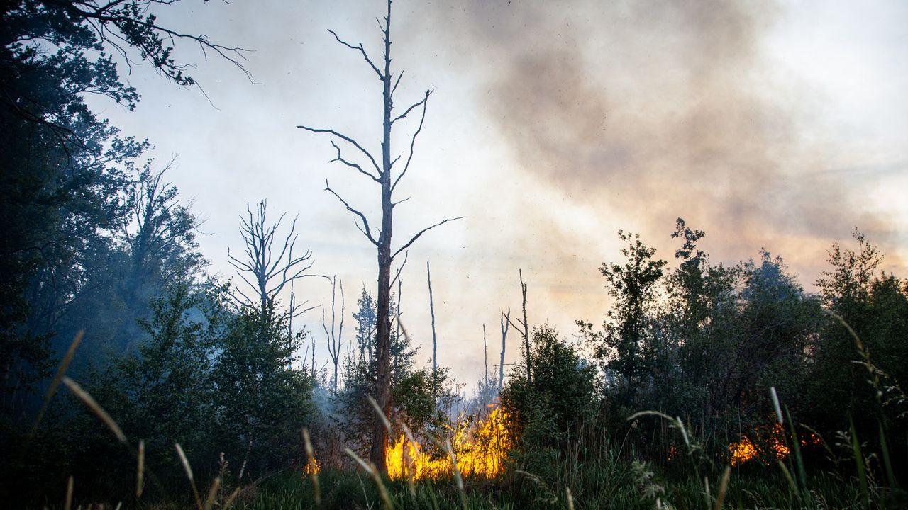 Wageningen Universiteit onderzoekt Peelbrand