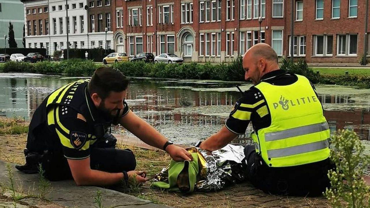 Horstenaar redt een ree uit de Zuid-Willemsvaart in Helmond