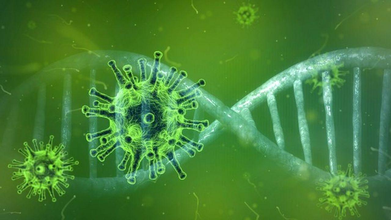 113 nieuwe besmettingen in Horst aan de Maas