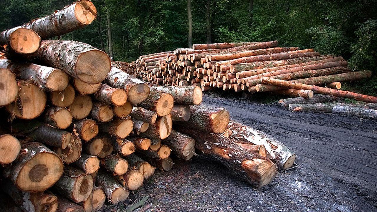 'Aanplanten bos geen oplossing voor geluidsoverlast Toverland'
