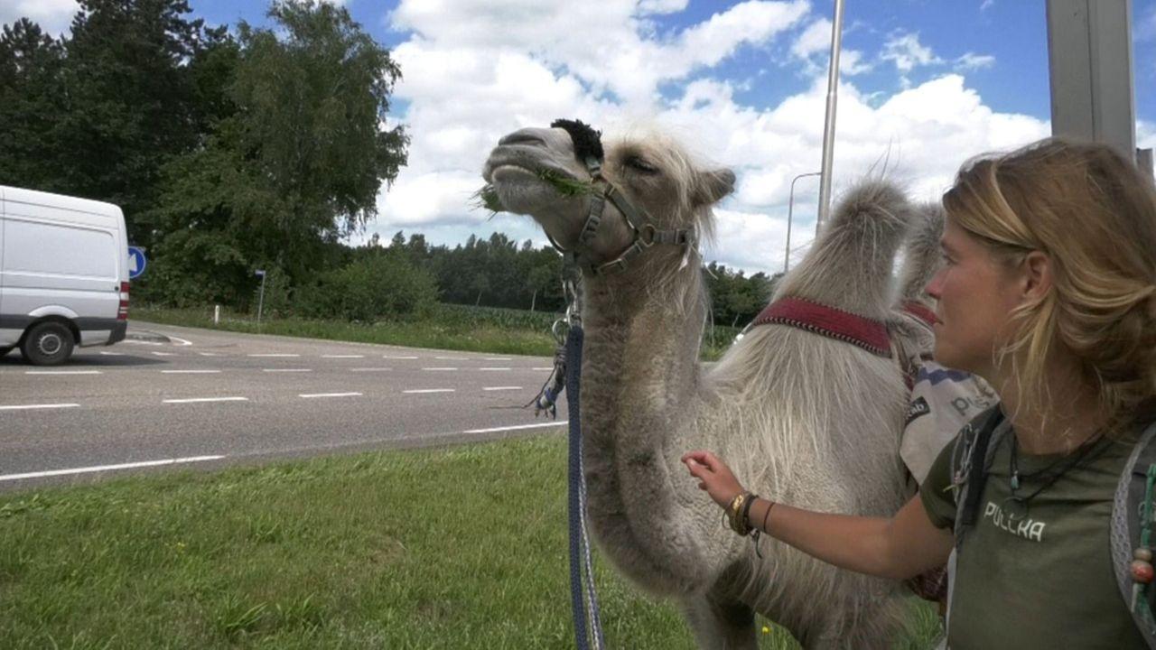 Fulltime avonturier trekt met kameel Einstein door provincie