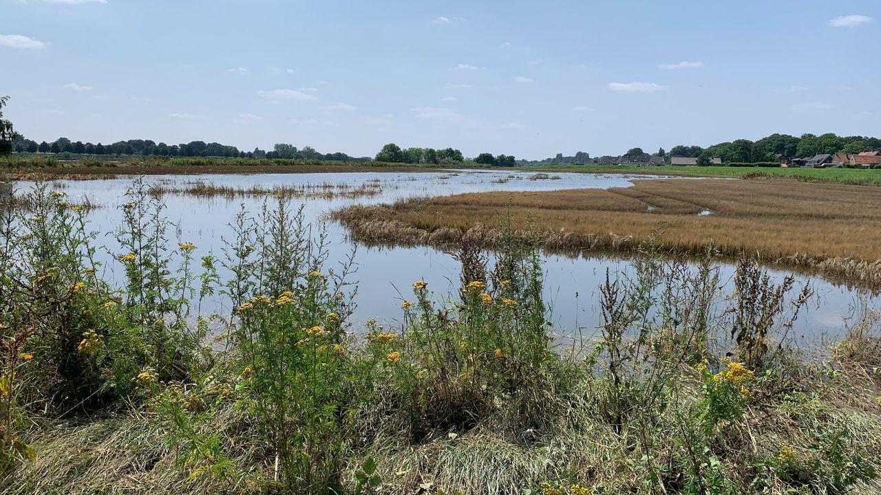In beeld: waterstand Maas in Horst aan de Maas daalt langzaam